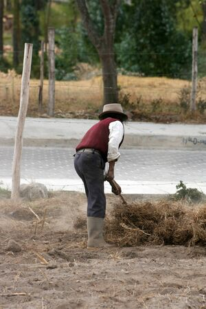 seeding: A farmer clearing his field for seeding in Cotacachi, Ecuador