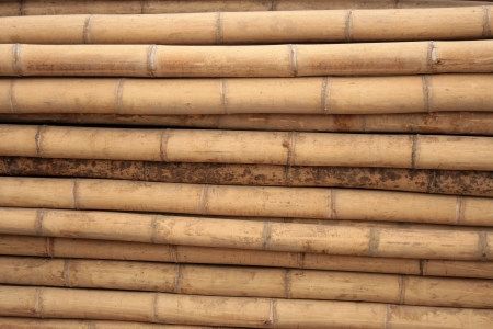 Freshly cut bamboo logs are cut and ready for sale at an outdoor sawmill in Cotacachi, Ecuador Imagens