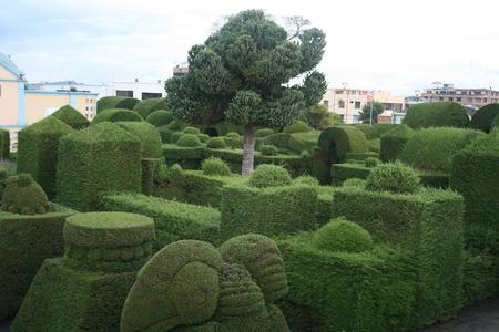 Shaped and cut cedar topiary bushes in a cemetery in Tulcan, Ecuador