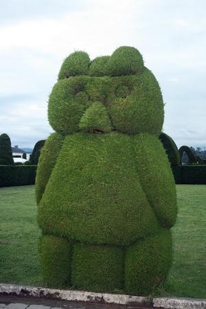 A bird shaped topiary cedar bush in a cemetery in Tulcan, Ecuador