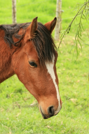 A brown horse standing in a farmers pasture in Cotacachi, Ecuador