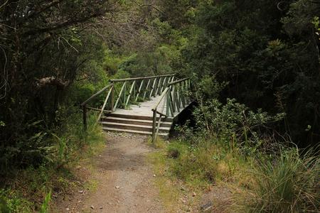 A wooden walking bridge on a path through a forest at Lake Cuicocha near Cotacachi Ecuador