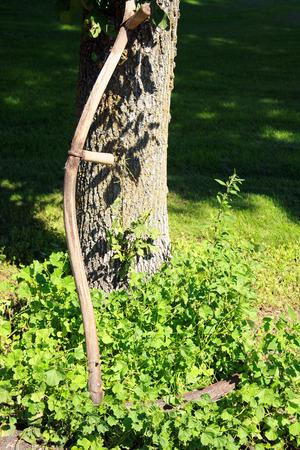 guada�a: Una guada�a vendimia apoyado contra un �rbol en un corral en Altona Manitoba Canad� Foto de archivo