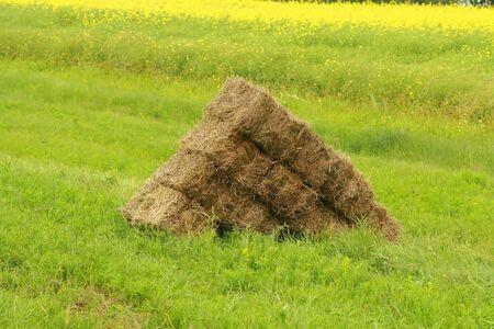 Rectangular hay bales in a field on a farm in Altona Manitoba Canada Фото со стока
