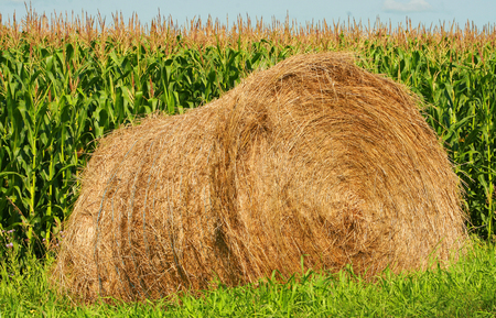canada agriculture: A bale of hay next to a corn field in Altona Manitoba Canada