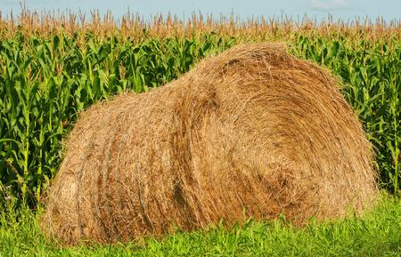 A bale of hay next to a corn field in Altona Manitoba Canada
