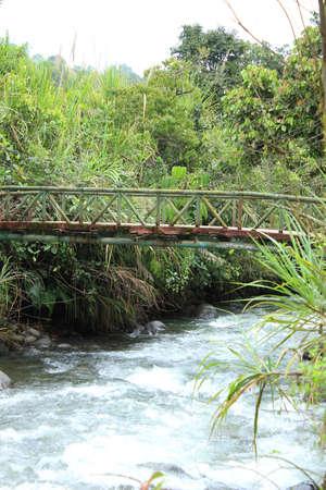 A bridge over the Mindo River in the cloud forest in Mindo, Ecuador Фото со стока