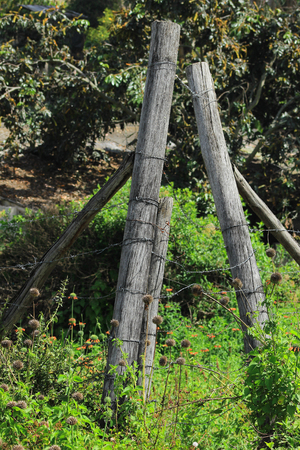 barbed wire fence: A barbed wire fence in a pasture on a farm in Cotacachi, Ecuador
