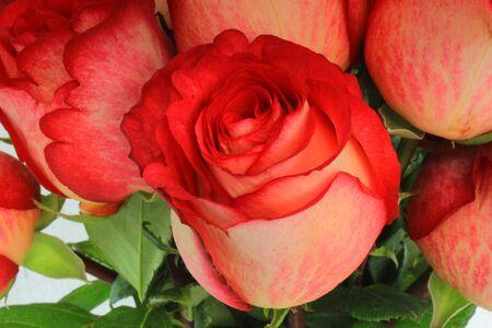 Red roses in a bouquet in Cotacachi, Ecuador