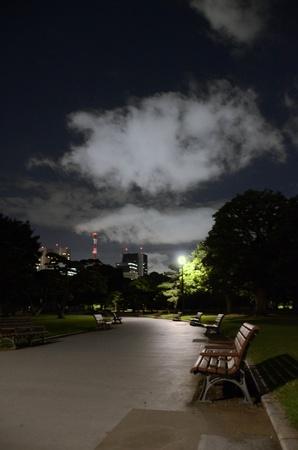 Quiet Garden in evening photo