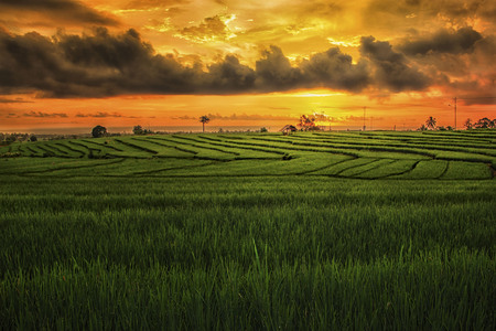 the beauty of the morning and the color of the sunrise in the fields and the blue mountains in Sumatra Indonesia which is found in Bengkulu is very good in the summer in Asia