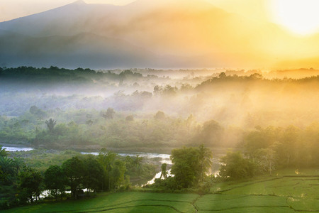 misty morning at forest indonesia