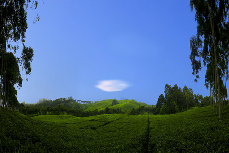 amazing panorama landscape tea fields