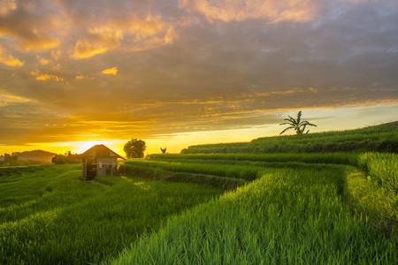 amazing sunset at paddy fields