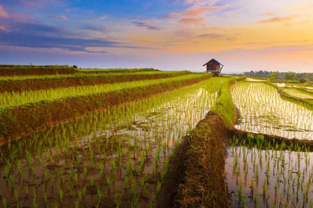 beauty sunset at paddy fields terace