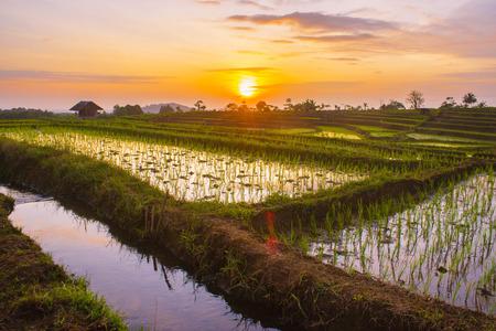 sunset at paddy fields Stock Photo