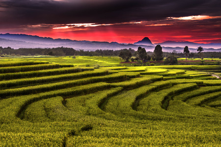 red sky at paddy fields Stock Photo