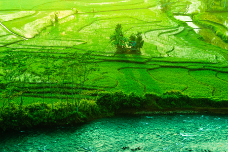 amazing green paddy fields asia