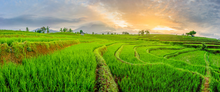 the beauty of the rice fields and the blue mountains in Sumatra Indonesia which is located in Bengkulu is very good in the summer in Asia Banque d'images