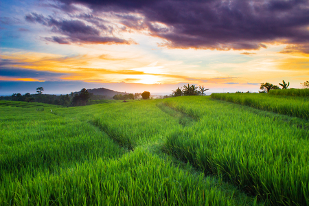 the beauty of the rice fields and the blue mountains in Sumatra Indonesia which is located in Bengkulu is very good in the summer in Asia Stock Photo
