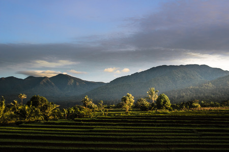 beauty morning at paddy fields with green color and blue mountain in indonesia Stock Photo
