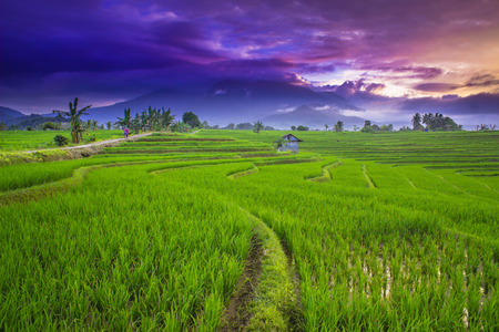 morning sky with green paddy fields and blue sky moment