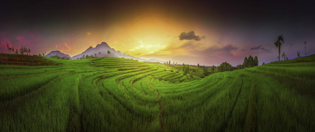panorama landscape indonesia nature travel of paddy fields with mountain
