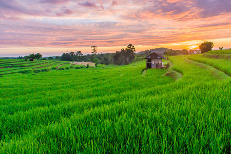 amazing sunset after rain with green rice fields in north bengkulu asia