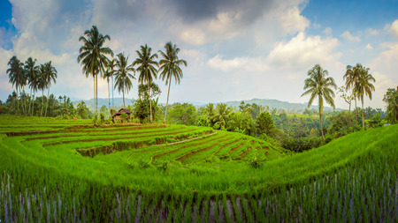 beauty panorama landscape nature paddy fields asia
