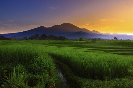 amazing morning color in paddy fieldds asia