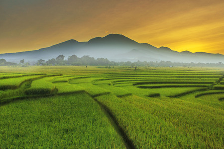 beauty morning at paddy fields indonesia with mountain range Stock Photo
