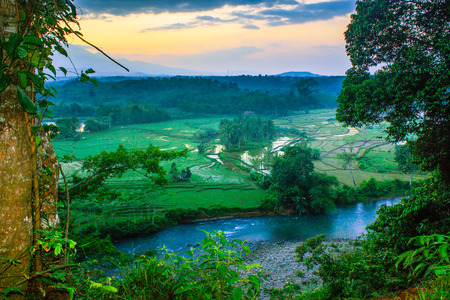 frraming of misty forest in north bengkulu indonesia Stock Photo