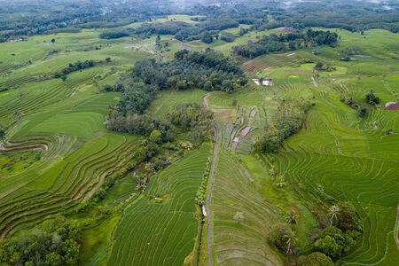 aerial photo beauty landscape paddy fields in north bengkulu, indonesia with amazing pattern of fields in road Stock Photo