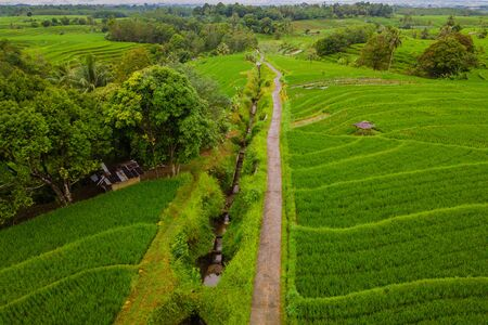 aerial photo beauty landscape paddy fields in north bengkulu, indonesia with amazing pattern of fields in the sky