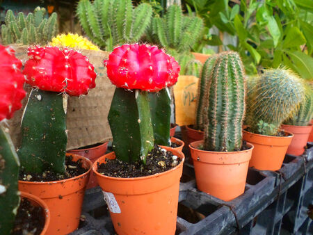 Flowers and cactus sold in garden and flower shop picture 3 photo