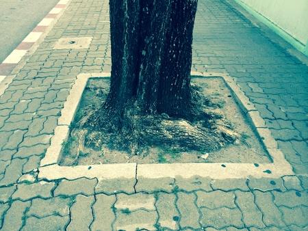beside: The big tree beside road