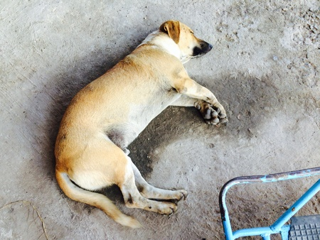 dead dog: The dog sleep in alone or it dead