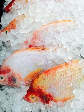 frozen fish: Frozen fish