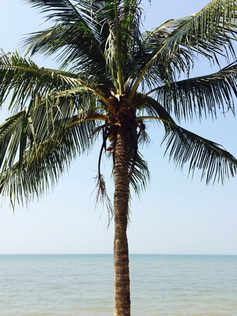 view: Sea view with coconut tree