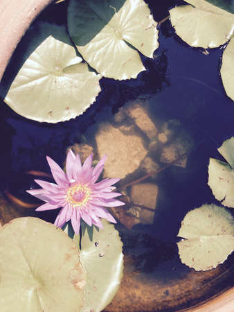 decor: Lotus flower Stock Photo