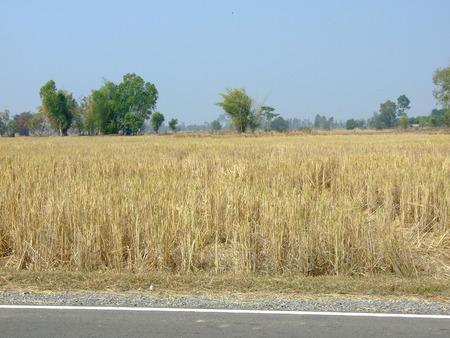 sprinftime: Pasture crops after harvest.