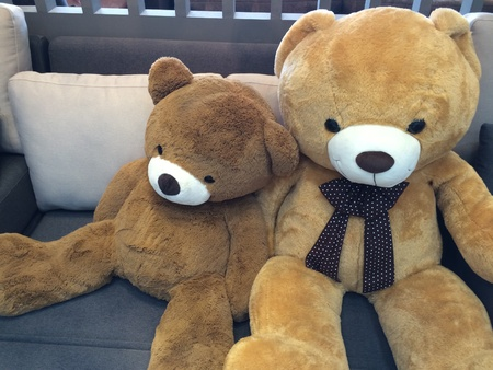 pillows: The bear doll  in Living room