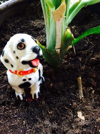 doll: Dog doll