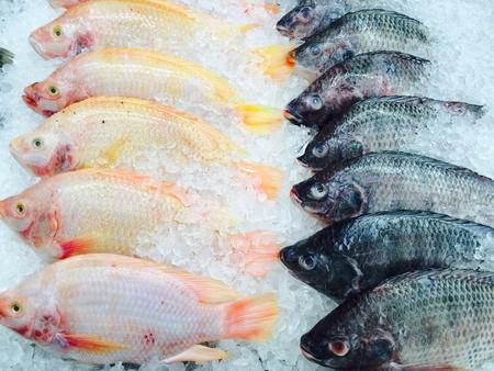 Frozen fish on ice  Stock Photo