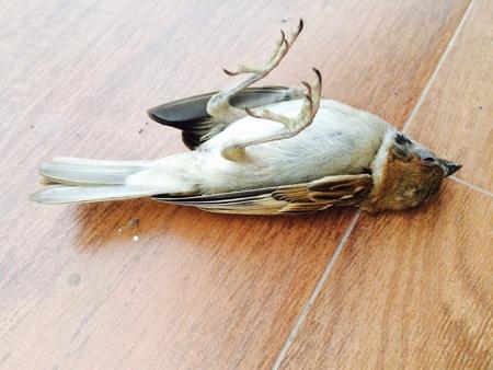 lonely bird: Dead bird Stock Photo