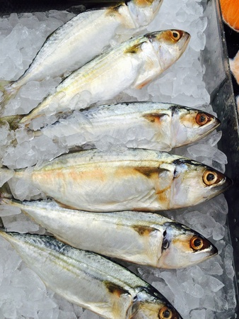 material: Fish seafood on ice frozen food