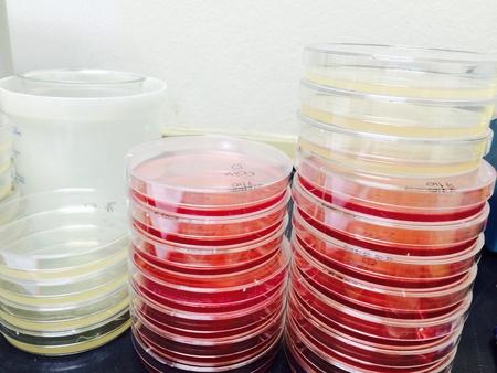microbiologia: Equipo de laboratorio de microbiolog�a Ciencia