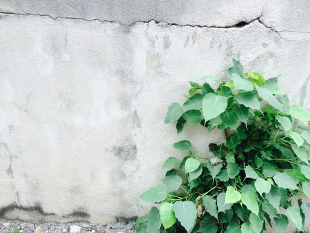 canvas: tree Background