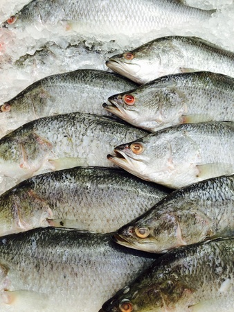 fish in ice: fresh fish frozen on ice Stock Photo