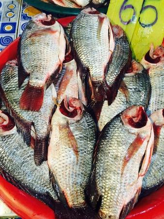 net: fish and squid market Stock Photo